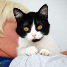 Manytears Rescue Cats Looking For Homes Cats Cute Animals Animals