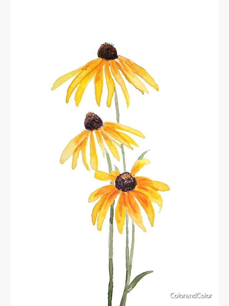 Summer Flowers Minimalist Design Watercolor Flower Floral Illustration Black Eyed Susan Art Print Colorful Decor