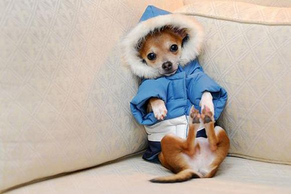Sweet Puppy all bundled up in his Winter Jacket