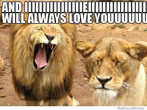 20 Funny I Love You Memes Sayingimages Com Funny Lion Funny Animals Love You Meme