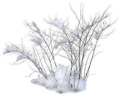 A Leafless Bush Covered With Snow Photoshop Landscape Garden Illustration Photoshop Textures