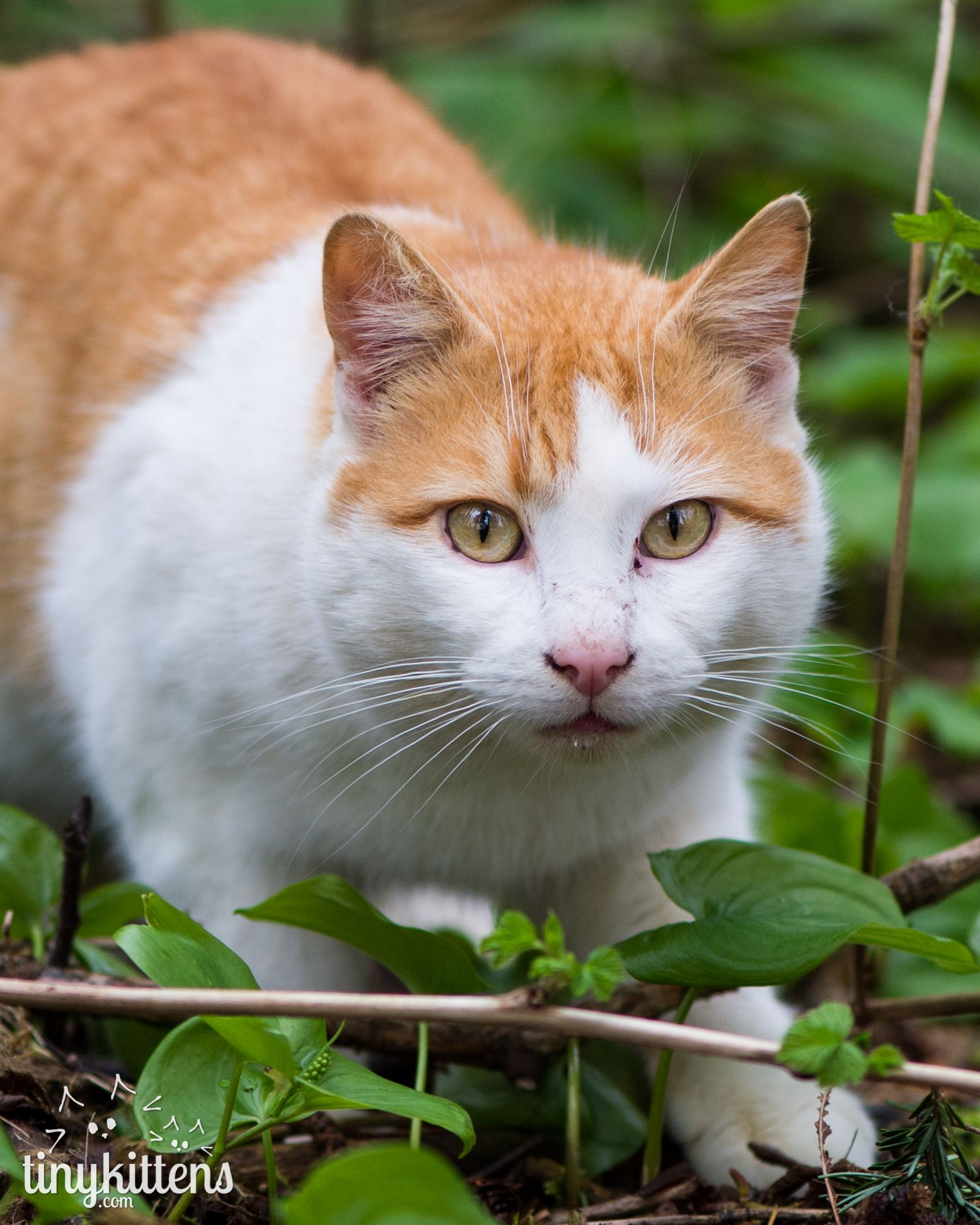 Chapel Cats and kittens, Beautiful cats, Cats
