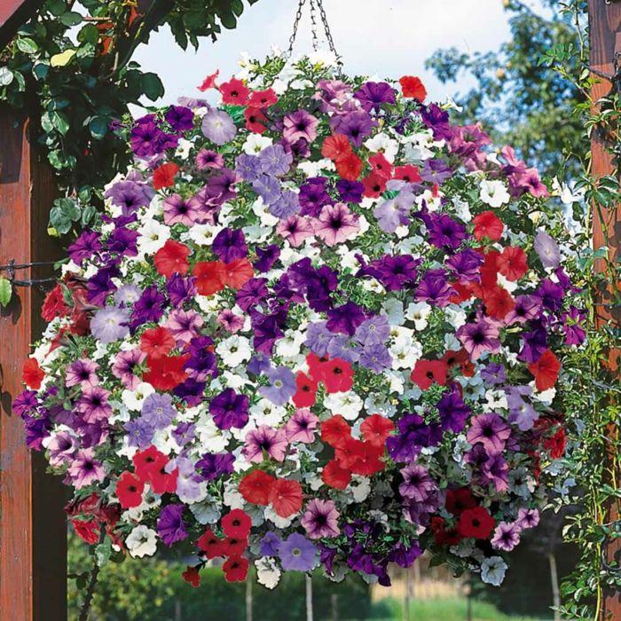 21 Balkonpflanzen Die Zu Ihrem Eingenen Balkon Passen Mit
