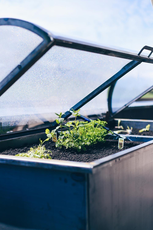 Hochbeet Tipps Anlegen Bepflanzen Und Leckeres Gemuse Ernten Hochbeet Hochbeet Anlegen Beete