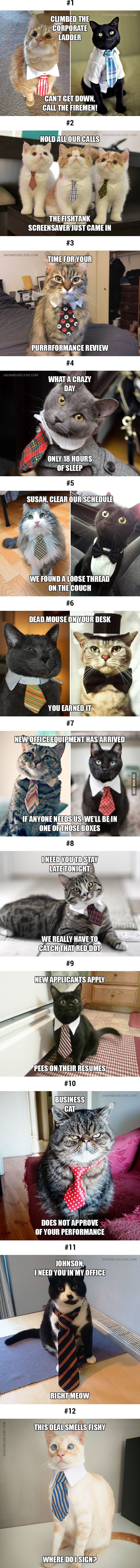 Cat being cat, one day, they will run the world - 9GAG