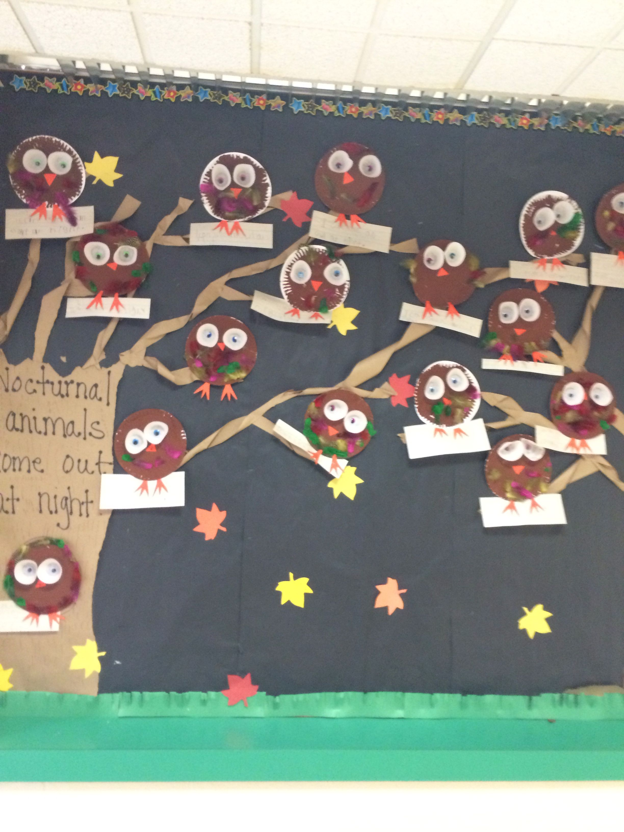 Nocturnal Animals Bulletin Board