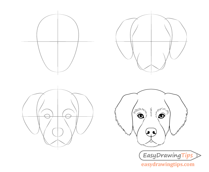 Dog Head Front View Drawing Step By Step Dog Drawing Simple Dog