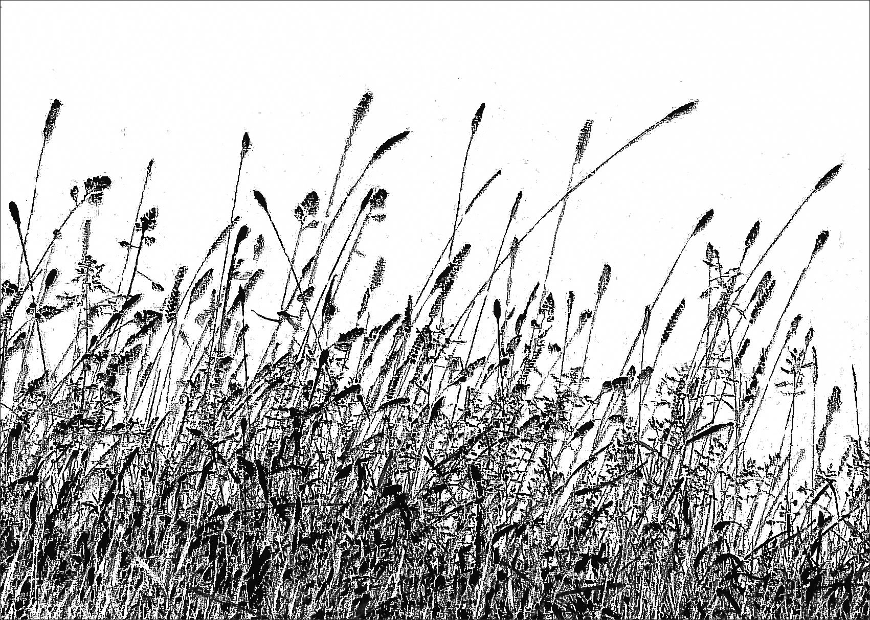 Tall Grass Silhouette Inside Image Result For Grasses Railings Insperation Pinterest