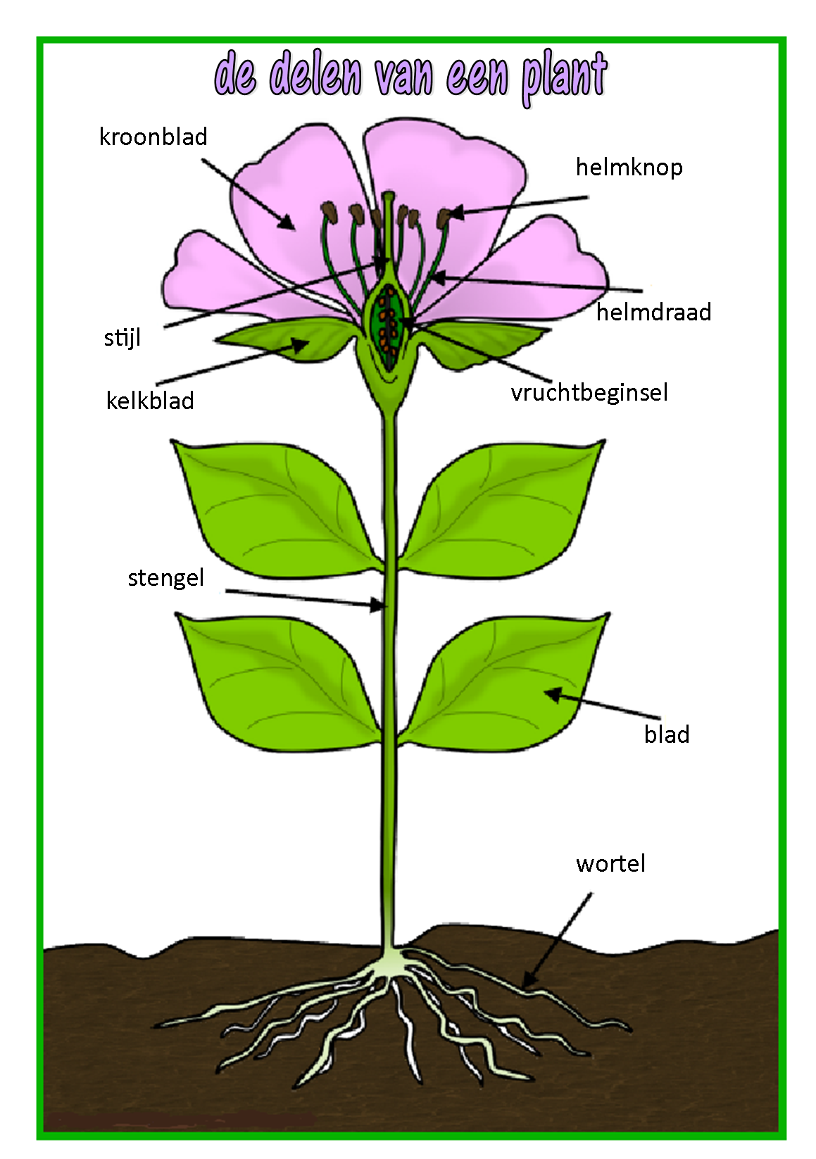 De Delen Van Een Plant
