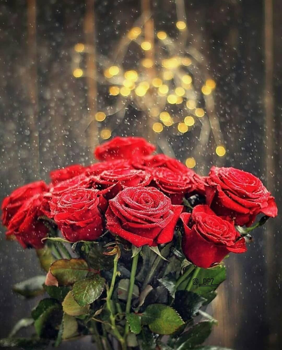 Pin By Dian Pratama On Girly Dpz Beautiful Rose Flowers Beautiful Roses Beautiful Flowers