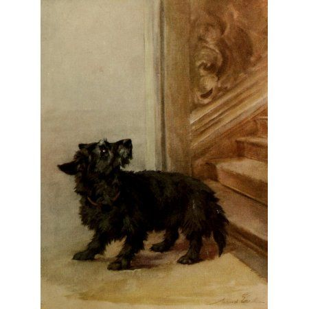 Power of the Dog 1910 Scottish Terrier Canvas Art - Maud Earl (18 x 24)