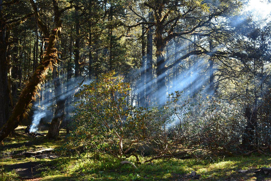 14TH ANNUAL SMITHSONIAN.COM PHOTO CONTEST Filtering Sunshine in the desolated woods This shot was taken on Day 5/9 of a 90km trek to Auli Bugyal in Himalaya. On the fine morning, the smoke of the fire used to make breakfast allowed Sunshine to play games with the light and dark.  TAGS: Himalaya, India, Serene     Read more: http://www.smithsonianmag.com/photocontest/detail/natural-world/filtering-sunshine-in-the-desolated-woods/#CgLBXyBLK65wpMUo.99 Give the gift of Smithsonian magazine