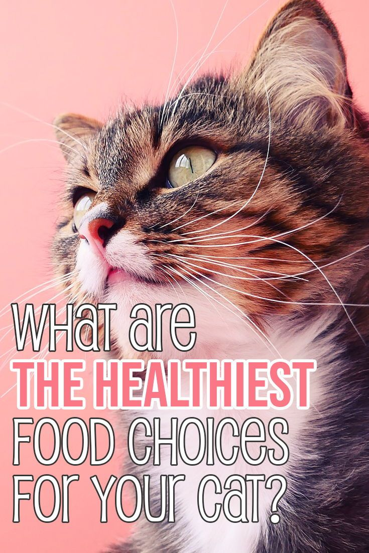 Discover what are the best food choices for your kitty