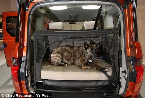 Bow Wow Wow Factor The Pet Friendly Car With A Dog Bed In The