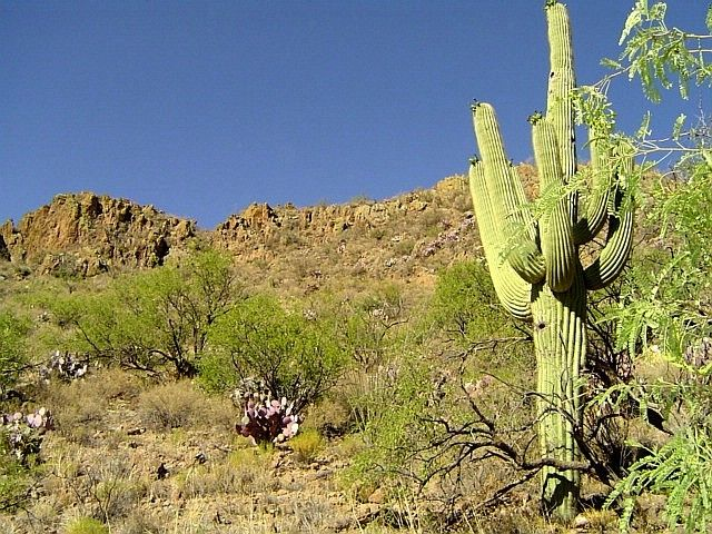Sonoran desert arizona | Tucson, AZ : Tucson Sonoran desert photo, picture, image (Arizona) at ...
