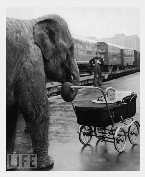 crazy cute animal photos  - elephant babysitter?
