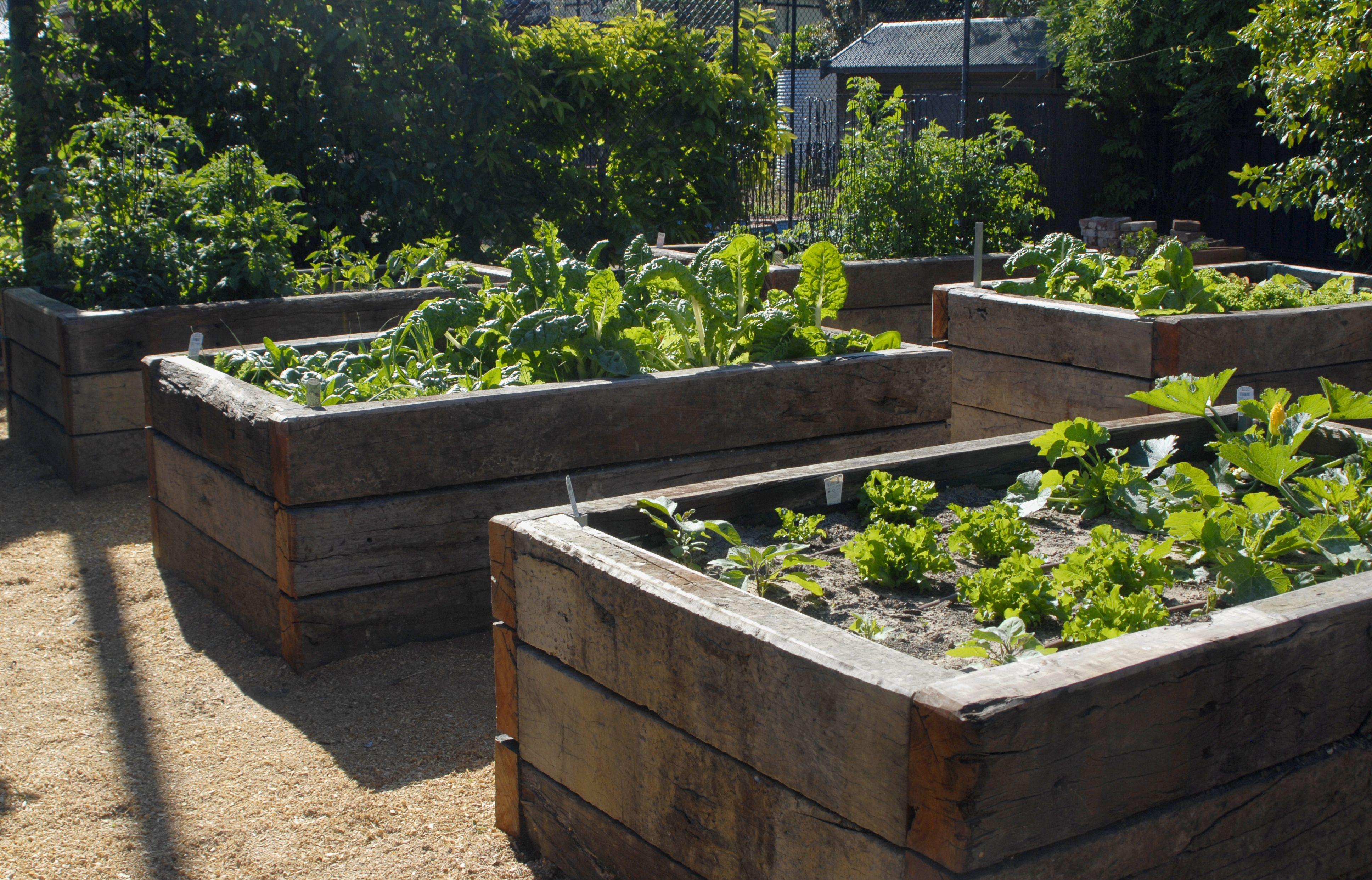 Unley Park Garden Design Lydie Paton Raised Garden Beds Veggie