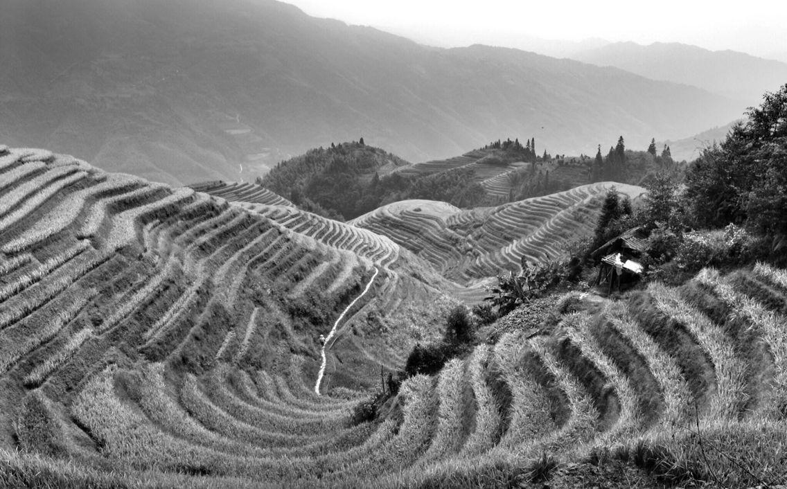 Dragon backbone rice terraces, China