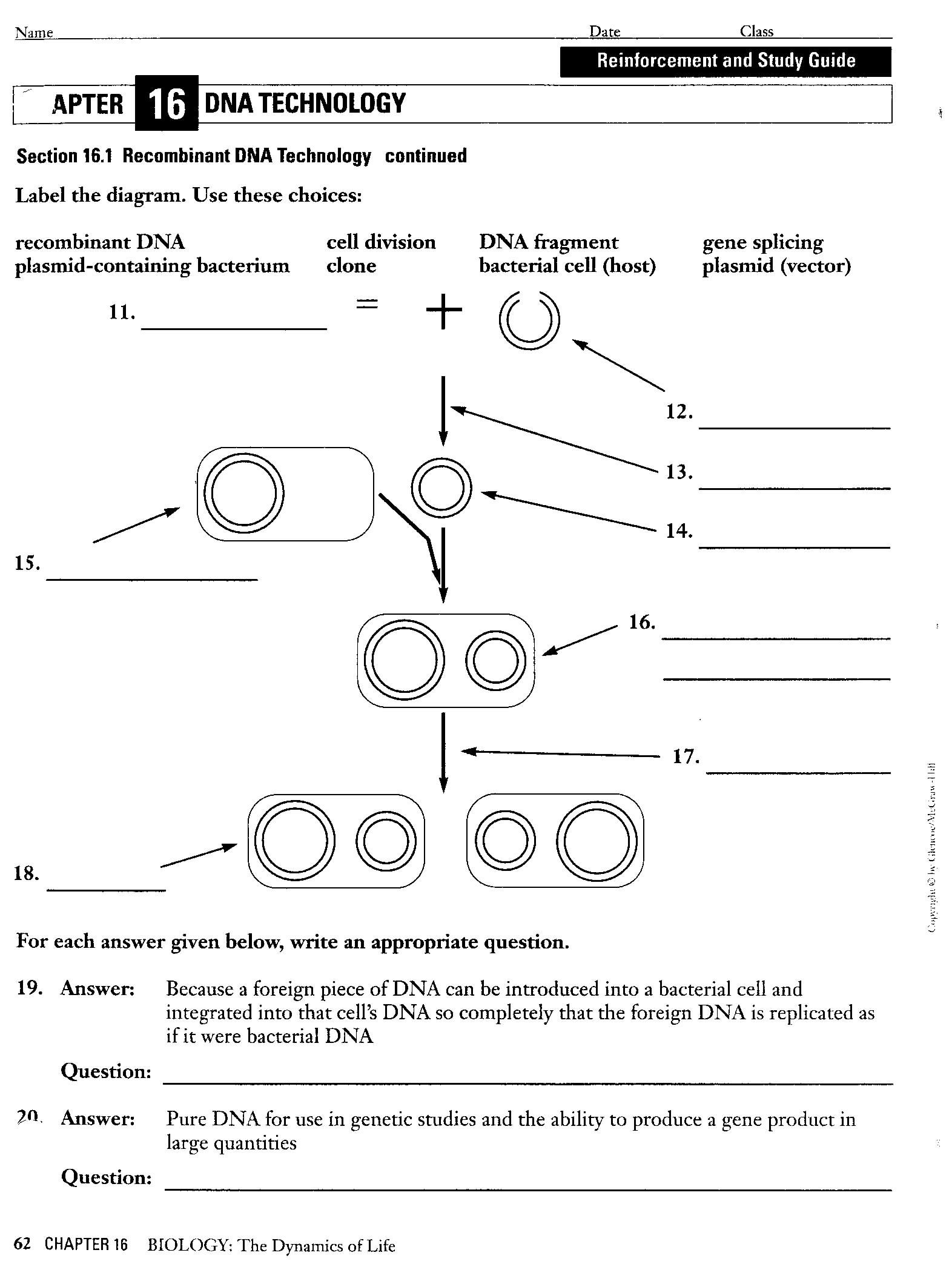 Restriction Enzyme Worksheet