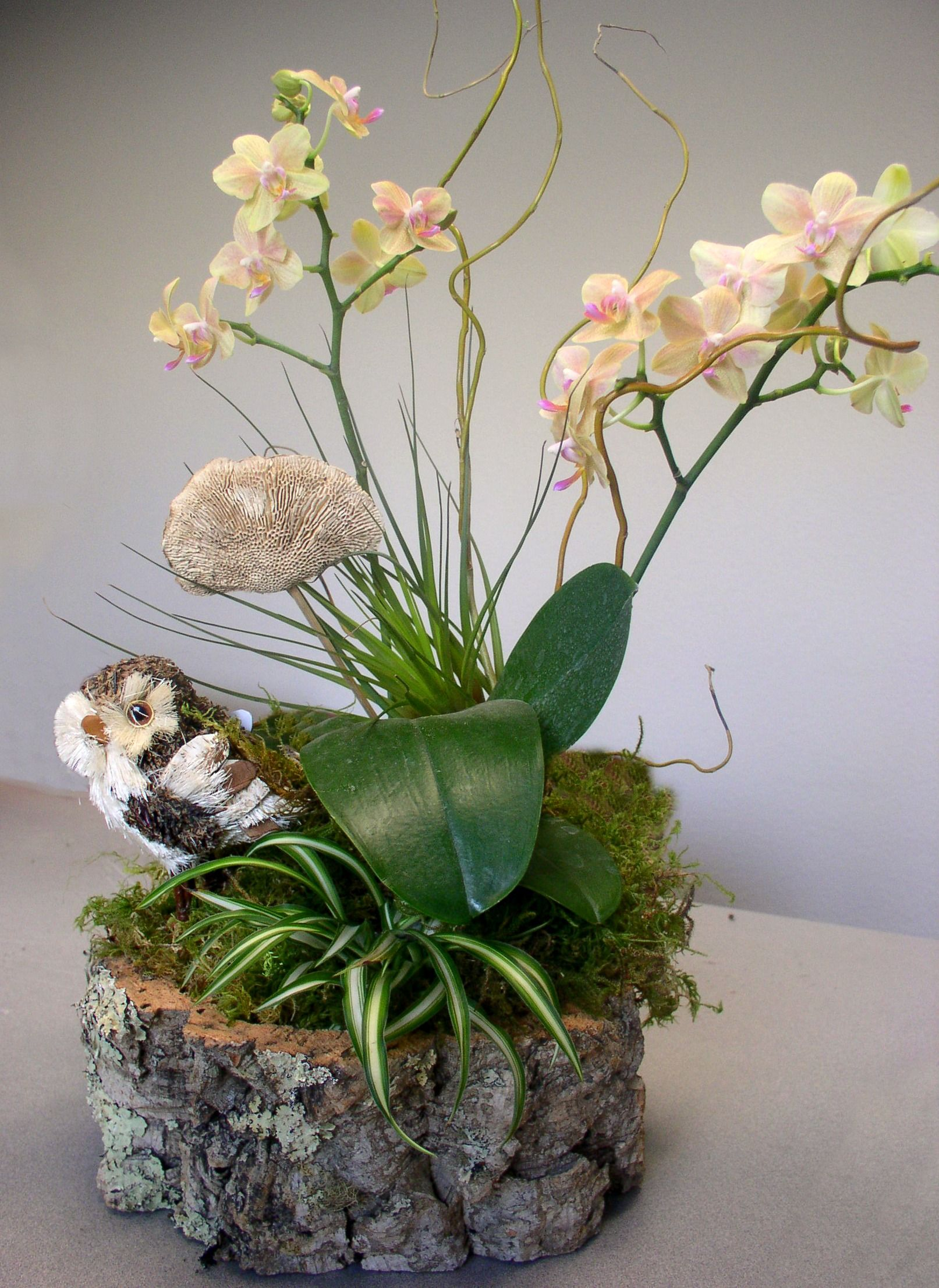 This ones a hoot flower pinterest orchid plants and gardens