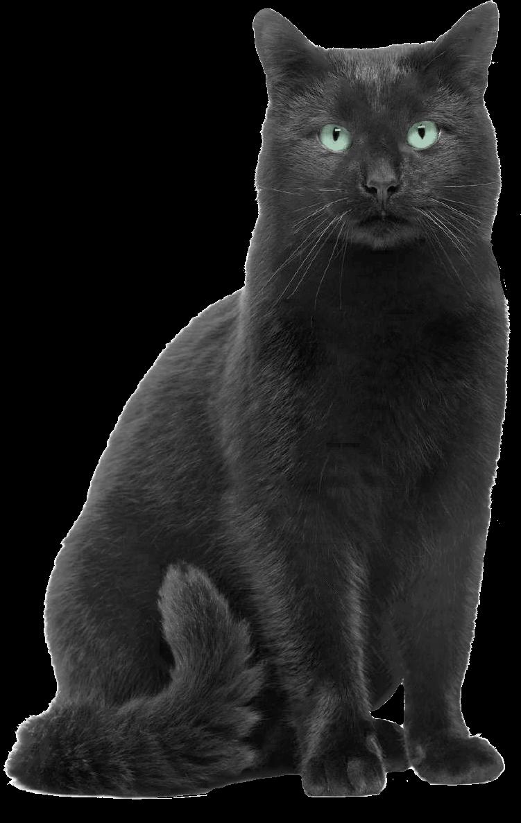 Download Halloween Black Cat Png Images Background Png Free Png Images Black Cat Drawing Cat Clipart Cat Cartoon Images