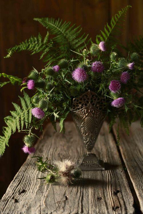 Coming Soon Thistle Flower Arrangement Thistle Flower Thistle Bouquet