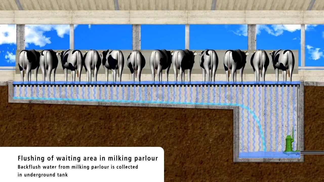 Slurry Solutions For Cattle Dairy Farms 1 5 Floor Flush