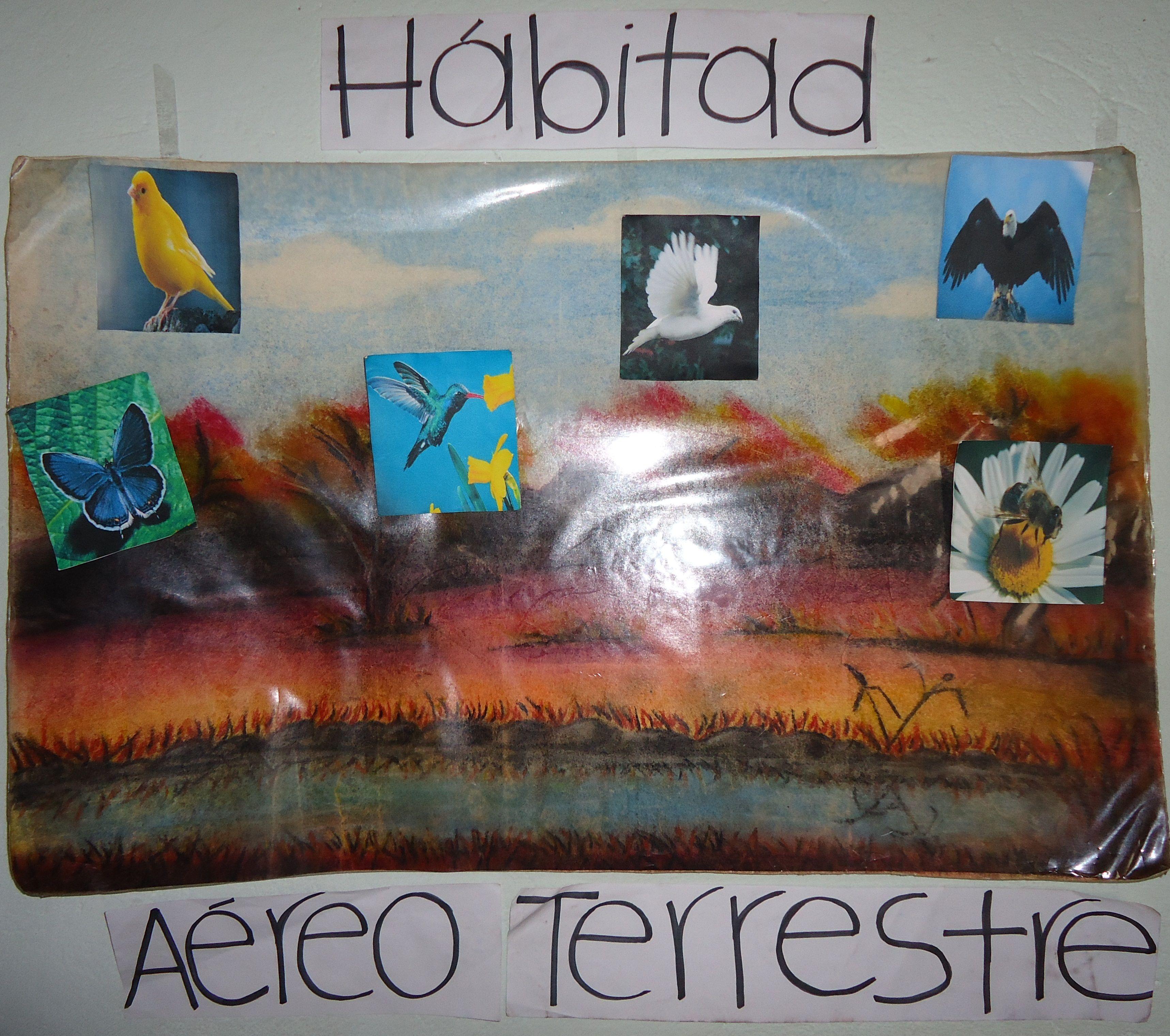 Habitat Aereo Terrestre Los Animales Aereos Terrestres Son