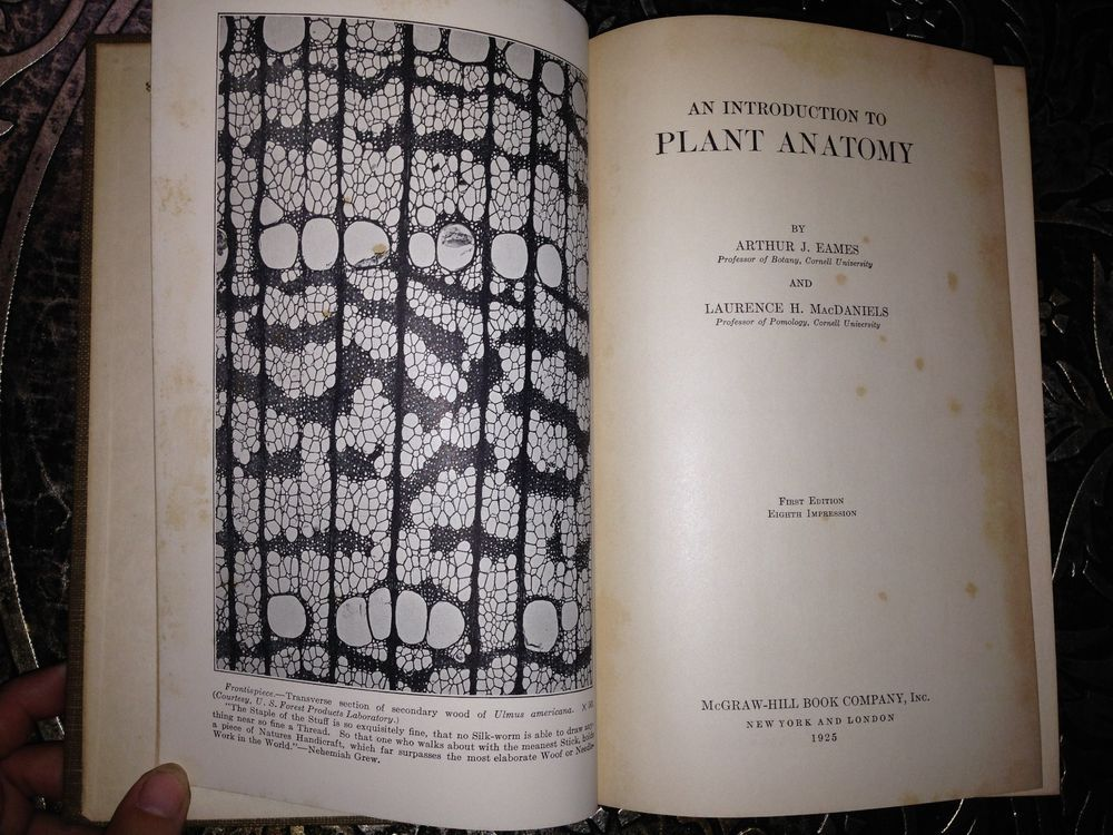 Introduction to Plant Anatomy, Eames & MacDaniels, 1925, First ...