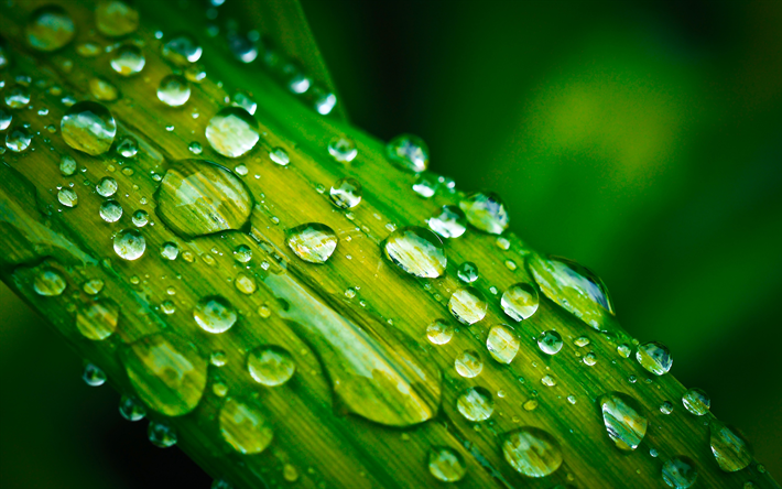 Download Wallpapers Dew 4k Water Drops Plant Stem Close