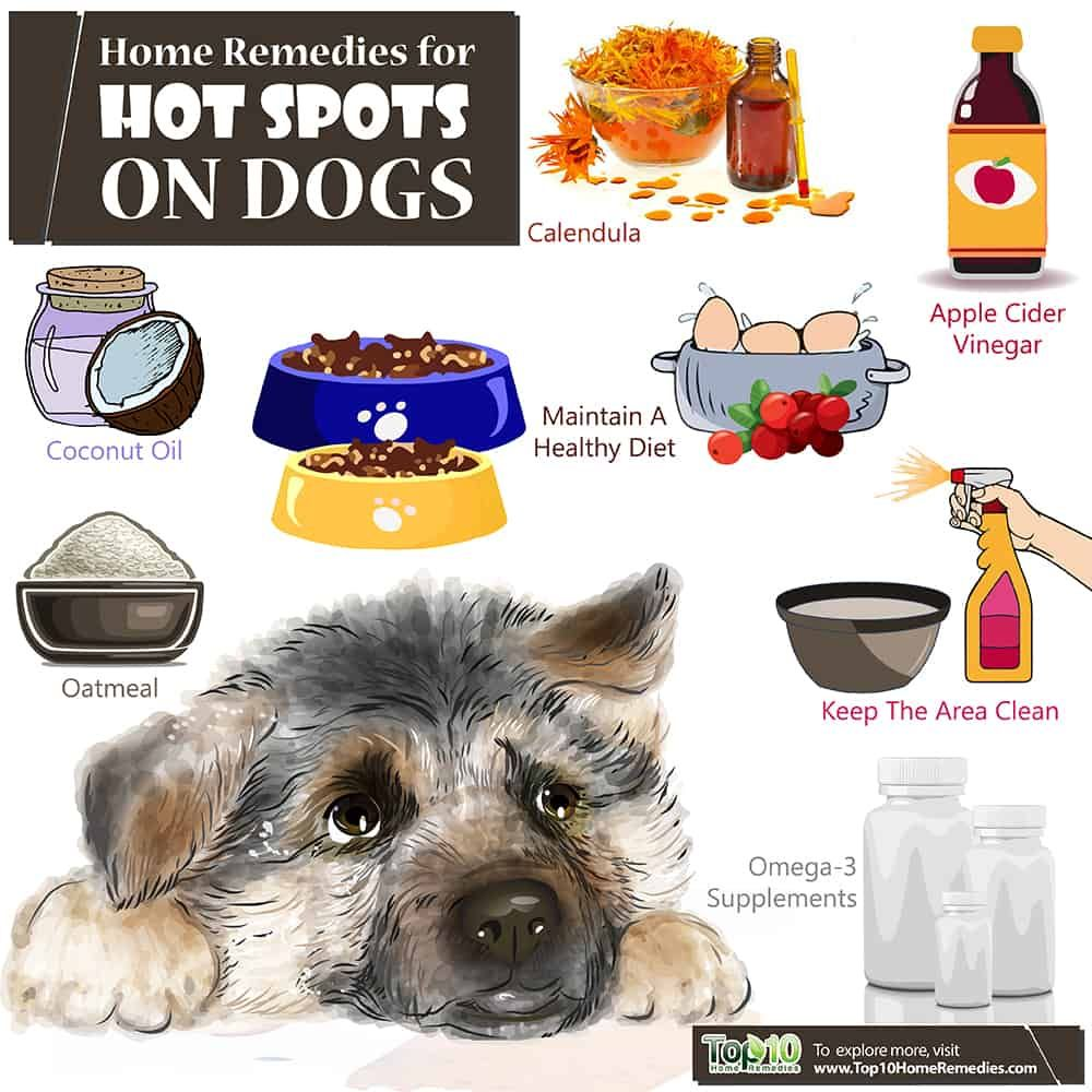 Home Remedies For Hot Spots On Dogs Top 10 Home Remedies Hot Spot On Dog Dog Hot Spot Dog Hot Spots