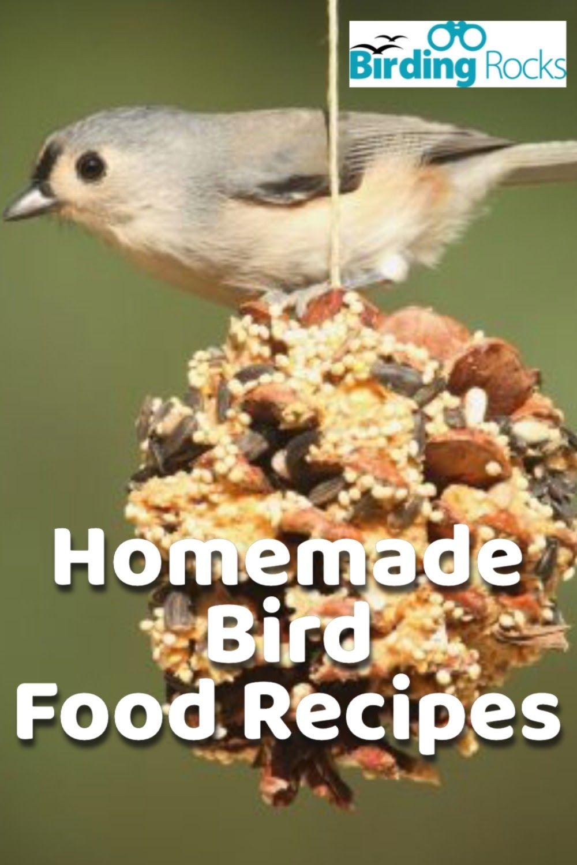 Homemade bird food recipes in 2020 bird food homemade