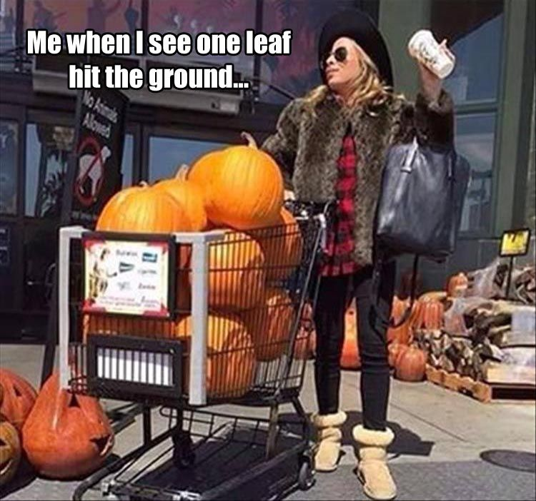Me when I see one leaf at the ground.... | Fall memes, Fall humor,  Halloween memes