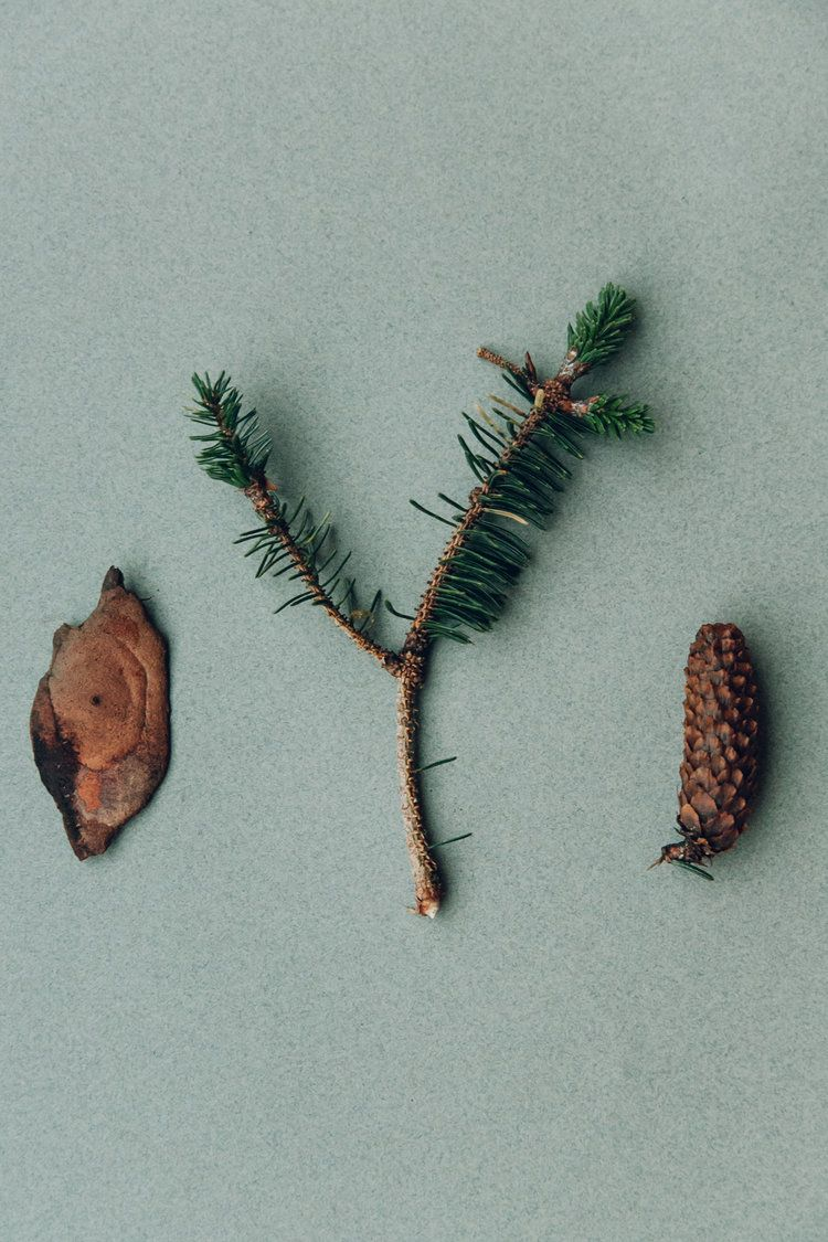 Woodland souvenirs from the Isle of Skye in Scotland.