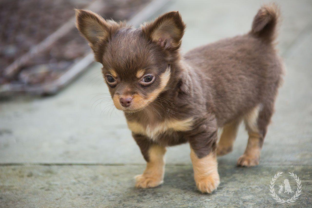 Lifestyle mit Hunden, Tipps vom Hundezüchter, Alles für