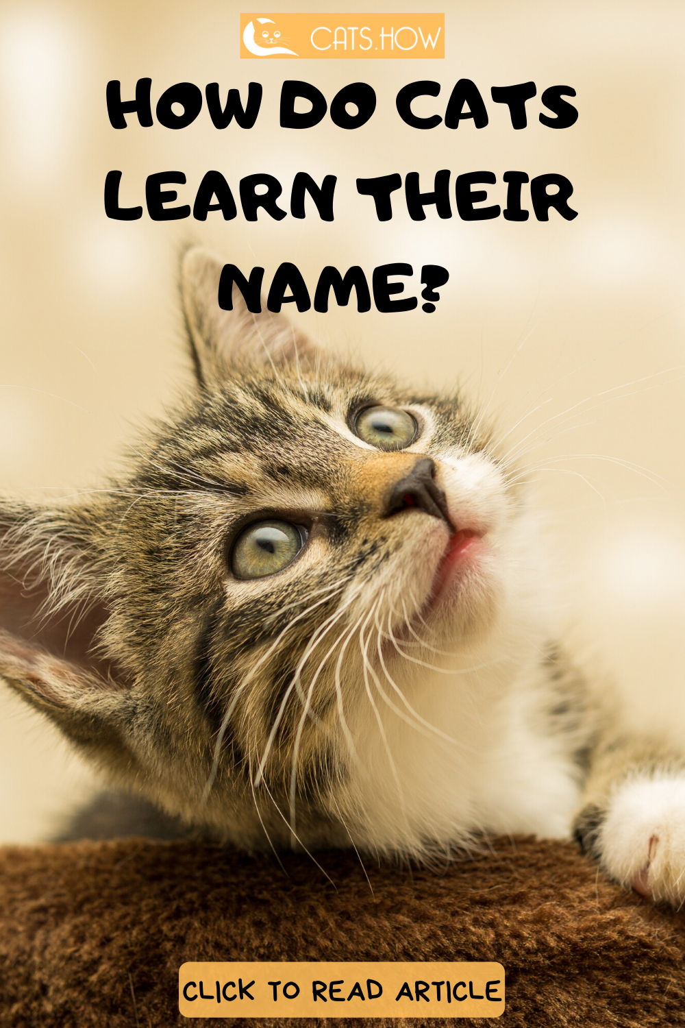 How Do Cats Learn Their Name (With images) Cats, Cat facts