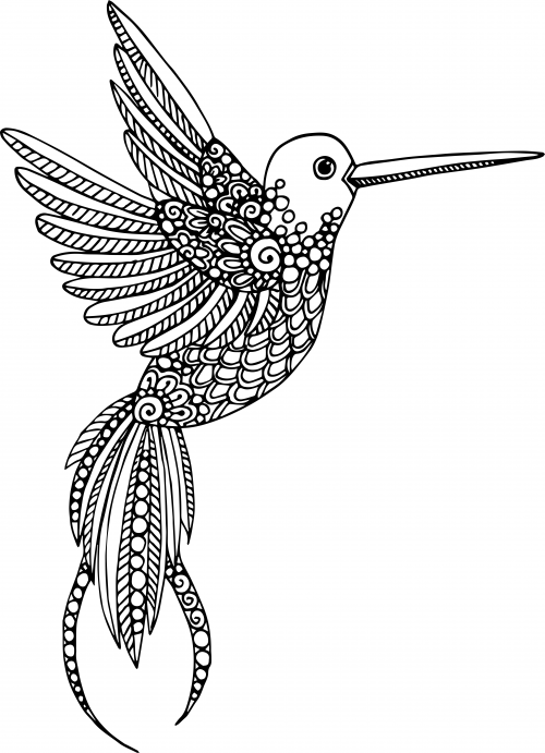 Hummingbird Animal Coloring Pages. Advanced Animal Coloring Page 18  Truths Thoughts and Adult coloring