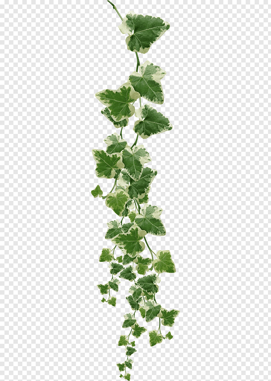 Pin By Franceona Fiona On Plants Png Creepers Plants Plants Hanging Plants