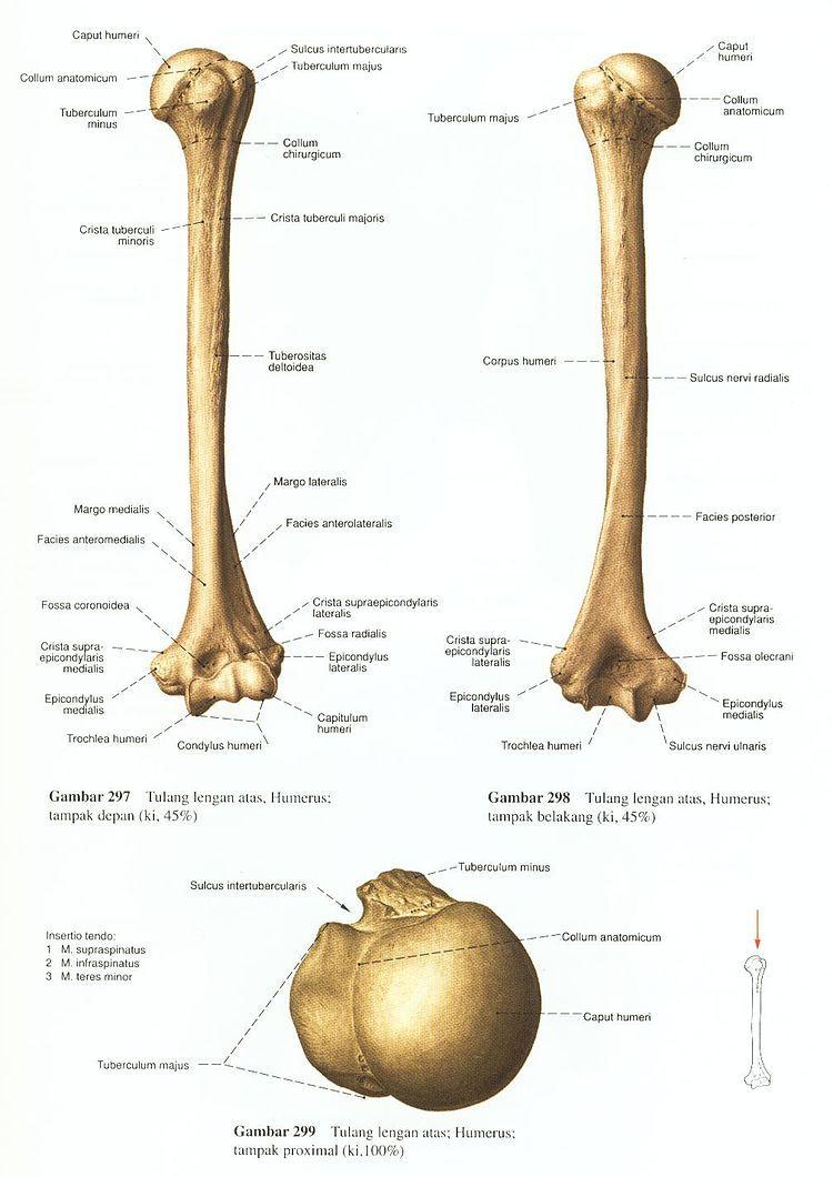 Pin von Hatice auf Anatomi   Pinterest