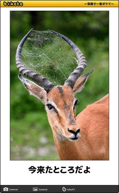 大喜利 ボケてに出てきた爆笑動物まとめ Bokete 動物 野生動物