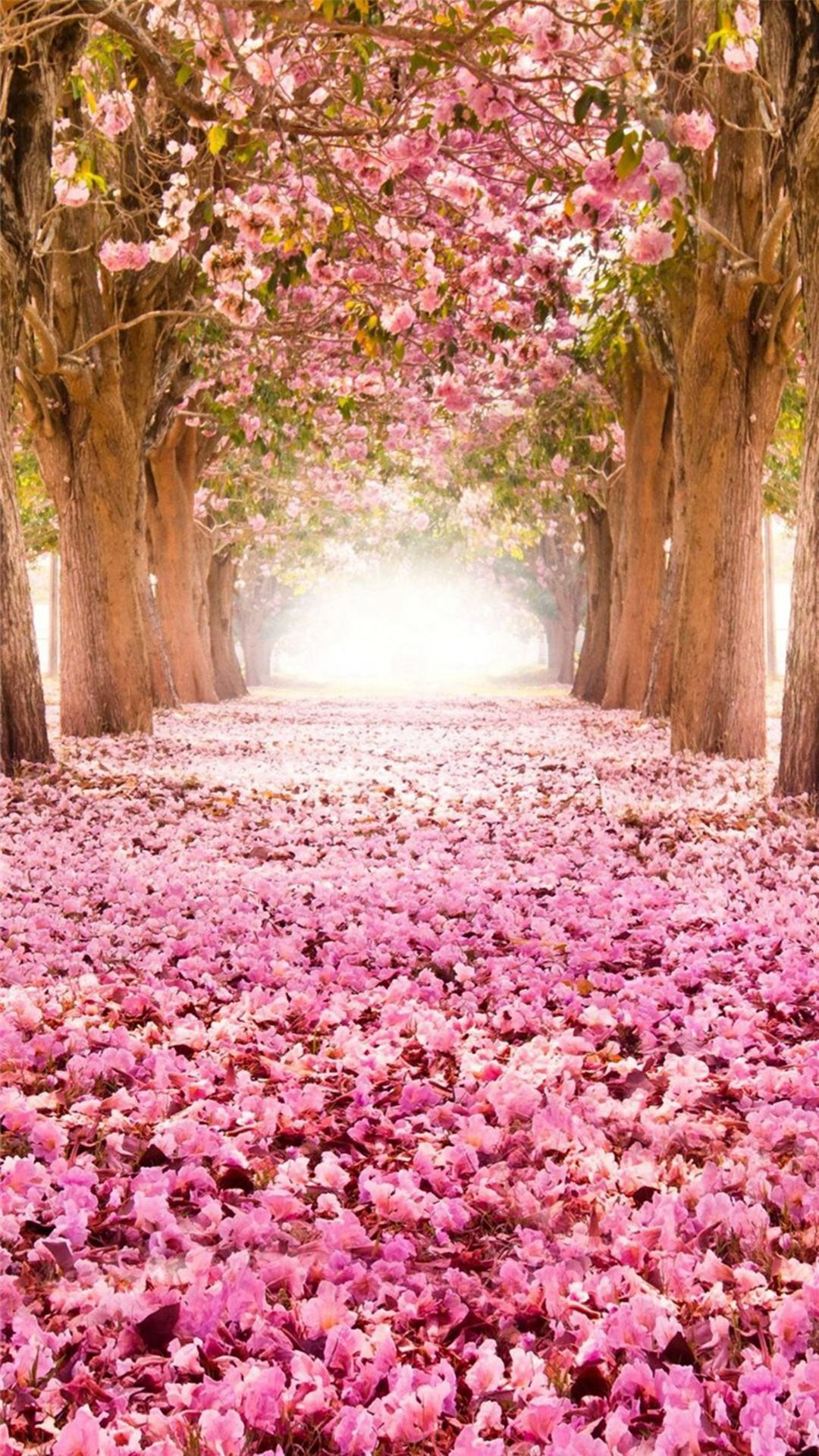 dreamy fantasy bloomy petal path iphone 6 plus wallpaper