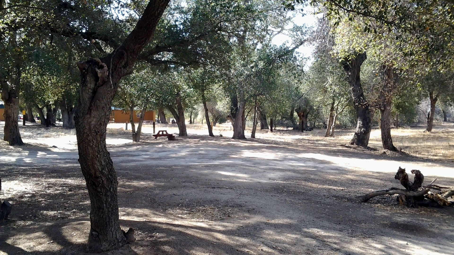 The Oaks At Sacred Rocks Rv Park And Campground Is The Perfect Place To Get Away To Relax With Your Fa Rv Parks And Campgrounds San Diego County Manzanita Tree
