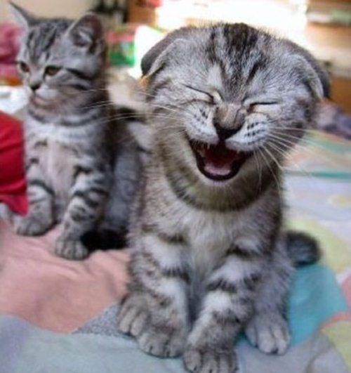 Flea Treatments For Kittens Under 12 Weeks Ehow Funny Animal Pictures Funny Animals Funny Cats And Dogs