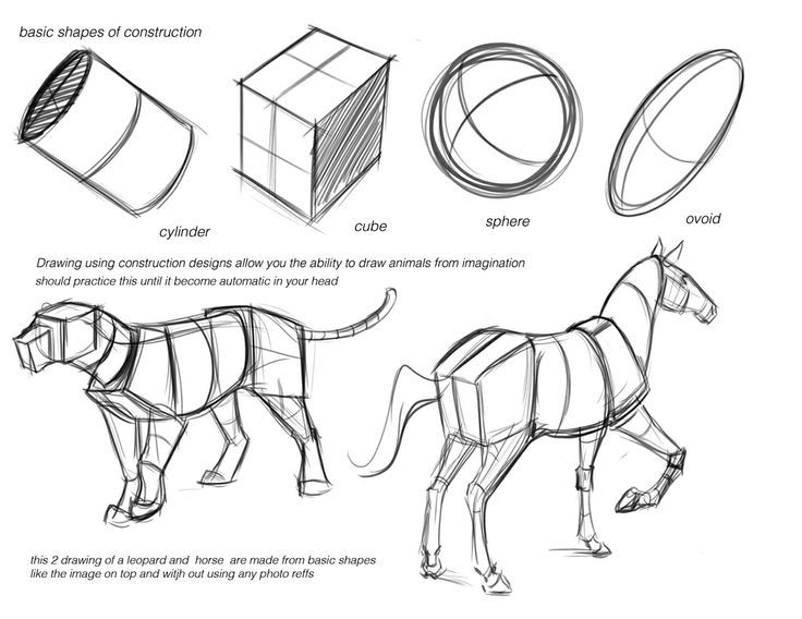 Basic Shapes For Drawing Animals - Master The Basics
