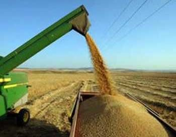 Tunisia: grain harvest increases, imports set to drop  Tunisia's grain harvest increased to 2.34 million tonnes from 1.3 million tons last year, which will reduce its grain imports sharply in 2015, Minister of Agriculture Lassaad Lachaal said on Tuesday. Nizar Ayari, an official in the National Grain Office said Tunisia's imports of cereals will decline by 80 percent in 2015.
