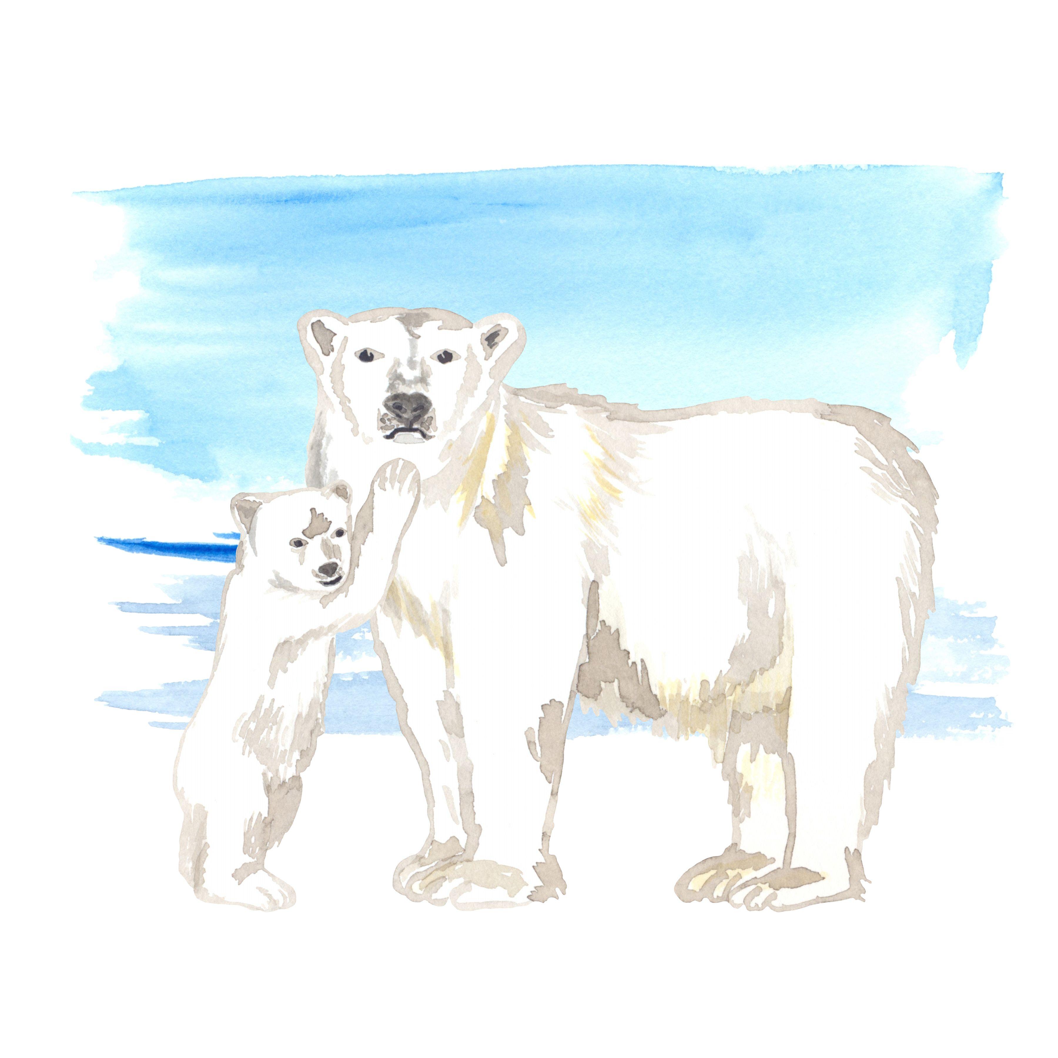 Polar Bears Watercolor Clipart Polar Bears Bear And Bear Cubs Clipart Snow Clipart Snowdrifts Watercolor Background Png In 2020 Bear Watercolor Watercolor Clipart Polar Bear