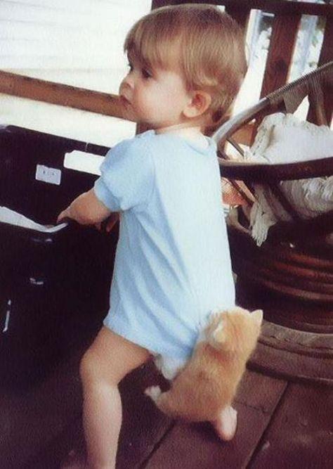 Chat Qui Font L Amour : amour, Babies, Kitten, Photo, Chat,, Humour, Bébé,, Images, Drôles, Bébé