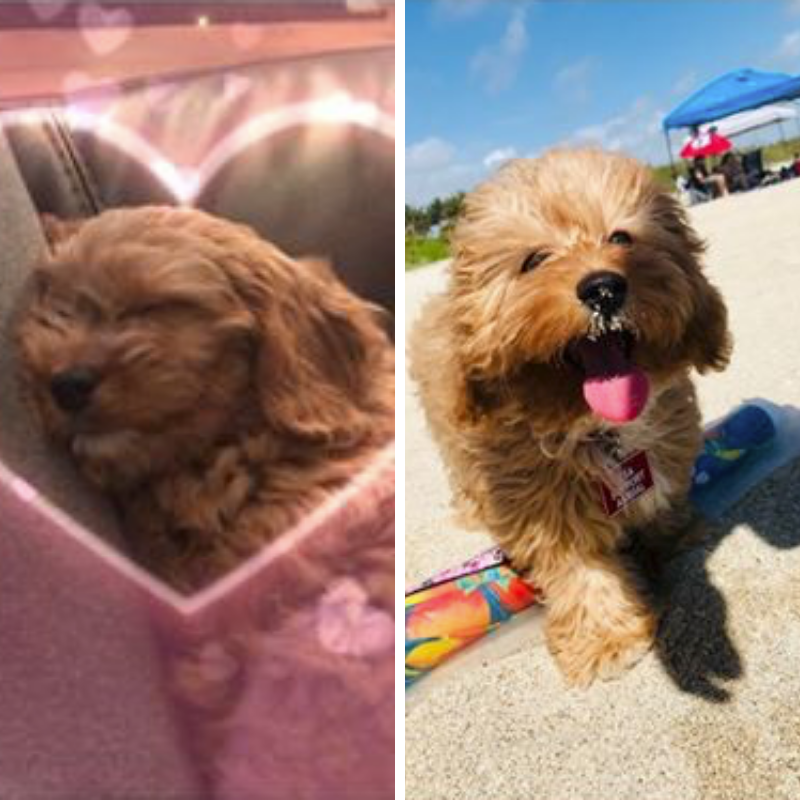 Pin on Puppy Transformations