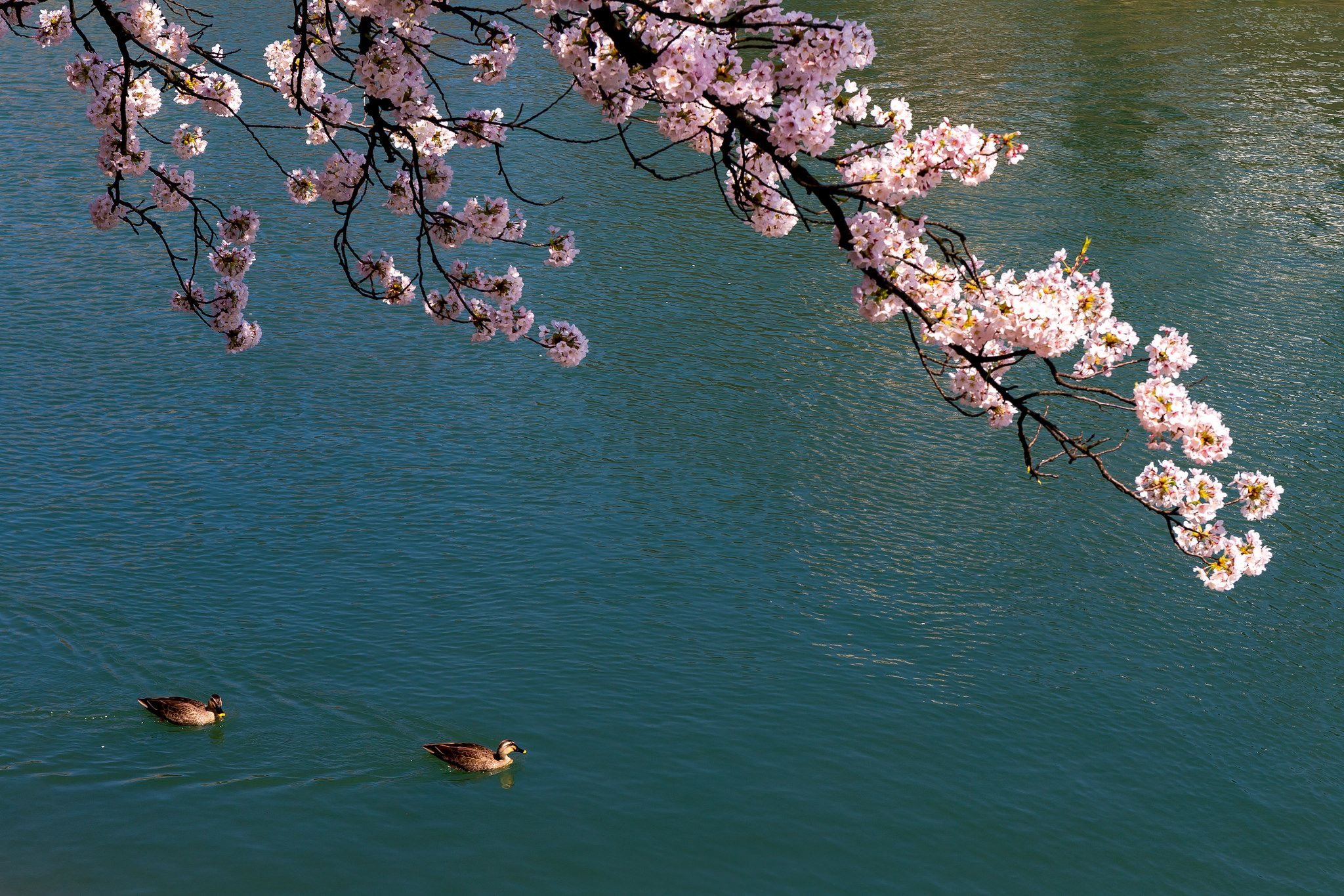 https://flic.kr/p/AB46rx | 浅野川 - 金沢 / Asano-gawa River in Kanazawa | I want to introduce wonderful Japan to the world.