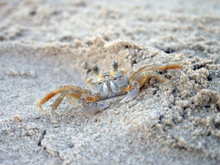 South Padre Island Crabby